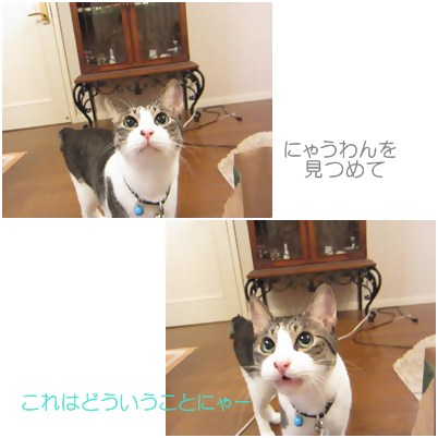 cats3_20120817152807.jpg
