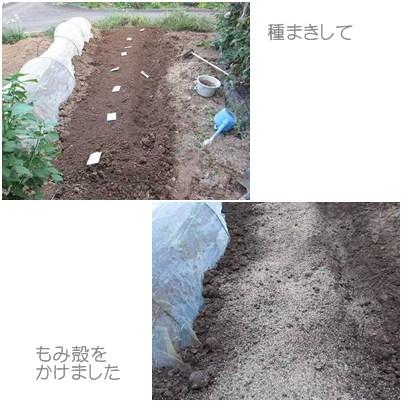 cats3_20120916235845.jpg