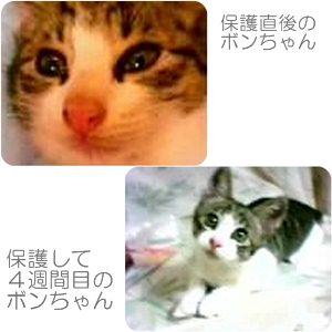 cats3_20121126205332.jpg