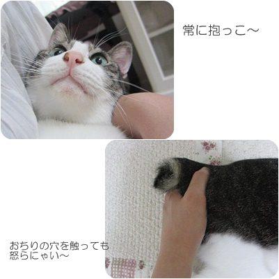 cats3_20121128202550.jpg