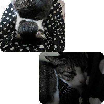 cats3_20121230173049.jpg