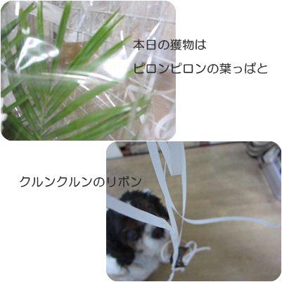 cats3_20130118181327.jpg