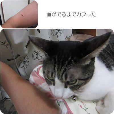 cats3_20130119165156.jpg