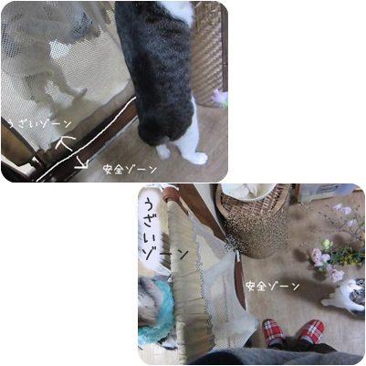 cats3_20130216191851.jpg