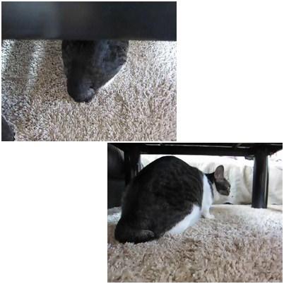 cats4_20120830233316.jpg