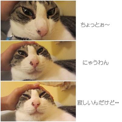 cats4_20120914202526.jpg