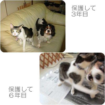 cats4_20121126205333.jpg