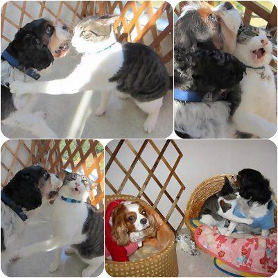 cats4_20121222210835.jpg