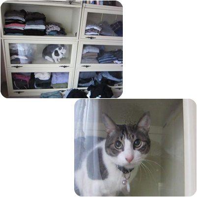 cats4_20130305000256.jpg