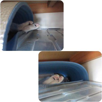 cats5_20120803162304.jpg