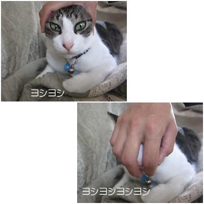 cats5_20120810002820.jpg