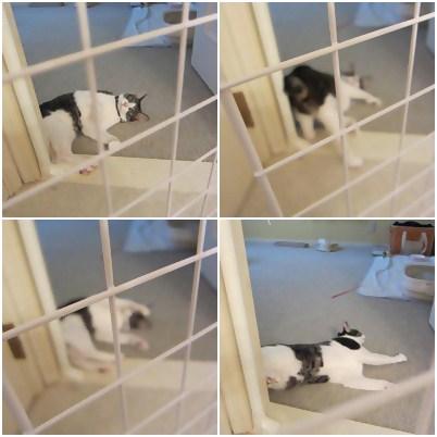 cats5_20120811113528.jpg