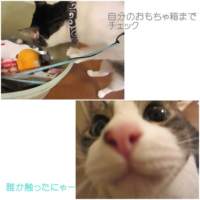 cats5_20120817152835.jpg
