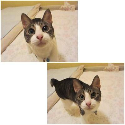 cats5_20120830233316.jpg