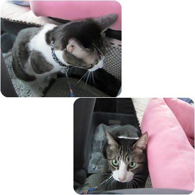 cats5_20130104184147.jpg
