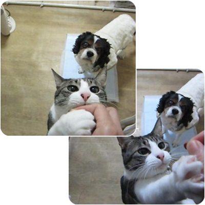 cats5_20130116202127.jpg