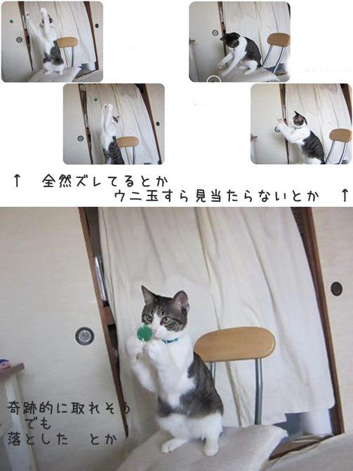 cats5_20130626182859.jpg