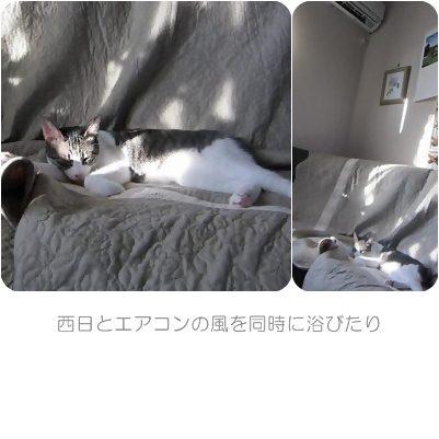 cats6_20120802180455.jpg