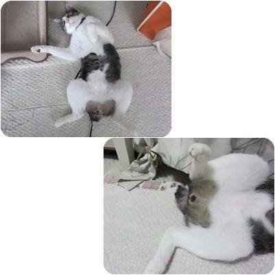 cats6_20120803162303.jpg