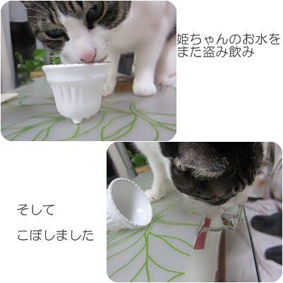cats8_20130108185222.jpg