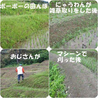 cats_20120615170300.jpg