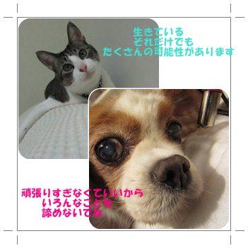 cats_20120617012936.jpg