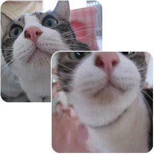 cats_20120704023237.jpg