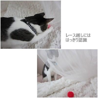 cats_20120721175738.jpg