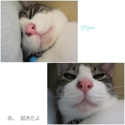 cats_20120729005551.jpg
