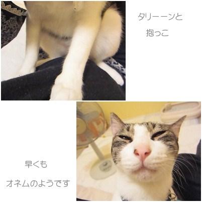cats_20120729150345.jpg