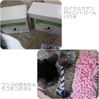 cats_20120802180421.jpg