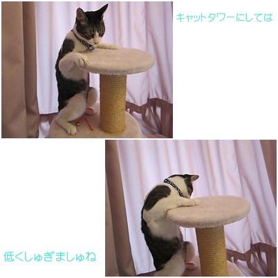 cats_20120808155552.jpg