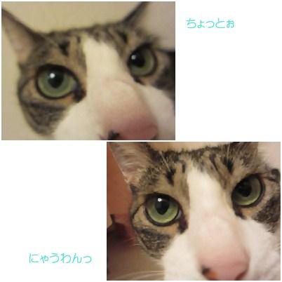 cats_20120808165133.jpg