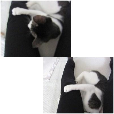 cats_20120810140246.jpg