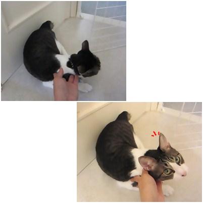 cats_20120811113529.jpg