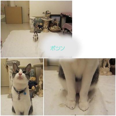 cats_20120811122643.jpg