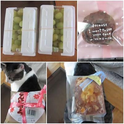 cats_20120817152807.jpg