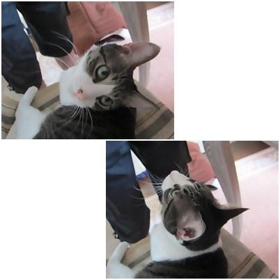 cats_20120818151116.jpg