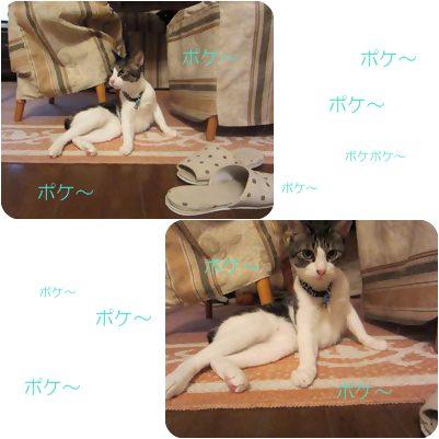 cats_20120820175231.jpg