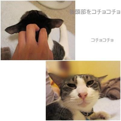 cats_20120831124732.jpg