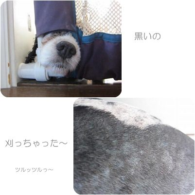 cats_20120904175145.jpg