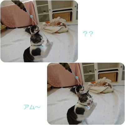 cats_20120905165712.jpg