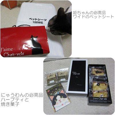 cats_20120911154802.jpg