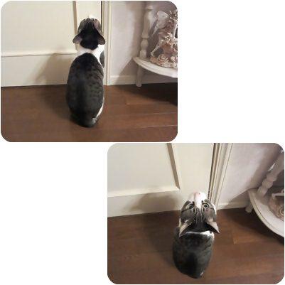 cats_20120912195923.jpg