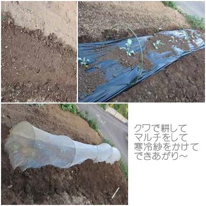 cats_20120916235846.jpg