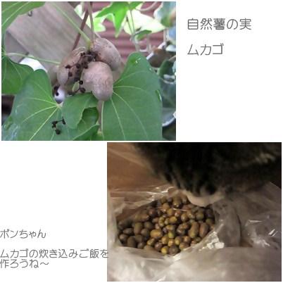 cats_20120922000112.jpg