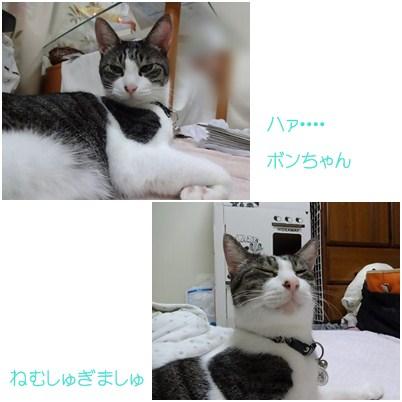 cats_20121002073330.jpg