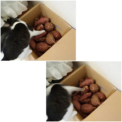 cats_20121010153953.jpg