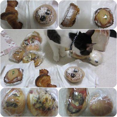 cats_20121015183834.jpg