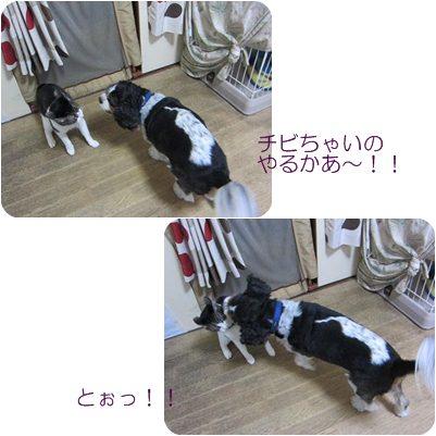 cats_20121017182654.jpg